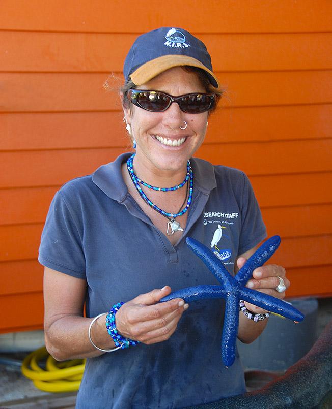 Seesterne? Gibt es auf Heron Island auch in Blau!