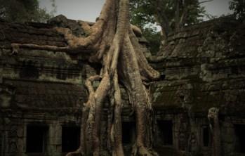 Ta Prohm tempel, Angkor, Cambodja