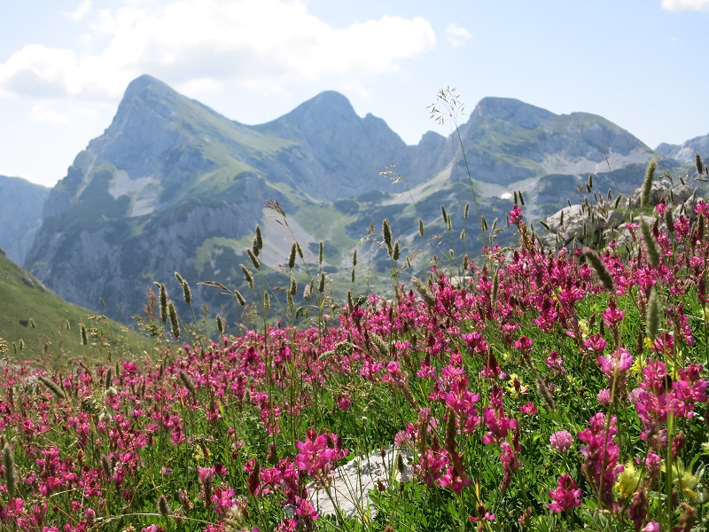 Flowers Montenegro Mountains