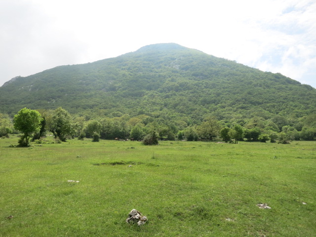 PPT meadow