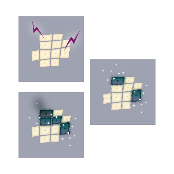 細胞のイラスト 広告 web  医療 ウエルネス 健康 美容  クライアントワーク イラストレーター イラストレーション illustration illustrator イラストレーターreism・i(リズム)