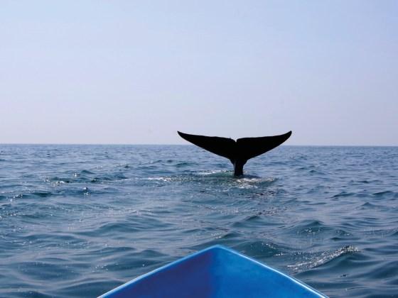trincomalee walvissen spotten sri lanka