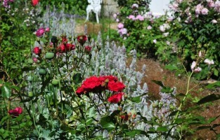 Leer alles over rozen in Godinton House and Gardens en volg een workshop over hoe je je eigen rozen kunt kweken! Reserveer een plaatsje voor de 'All About Roses'-workshop in Godinton House and Gardens in Ashford en leer alles over rozen van hun expert-hoofdtuinier. De cursus vindt plaats op 18 februari en kost £55 per persoon, inclusief een huisbereide lunch en versnaperingen. Reserveren is noodzakelijk. © Visit Kent