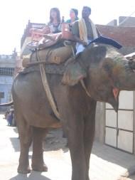 Intian matka 15.2 - 6.3.2008 506