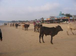 Intian matka 15.2 - 6.3.2008 565