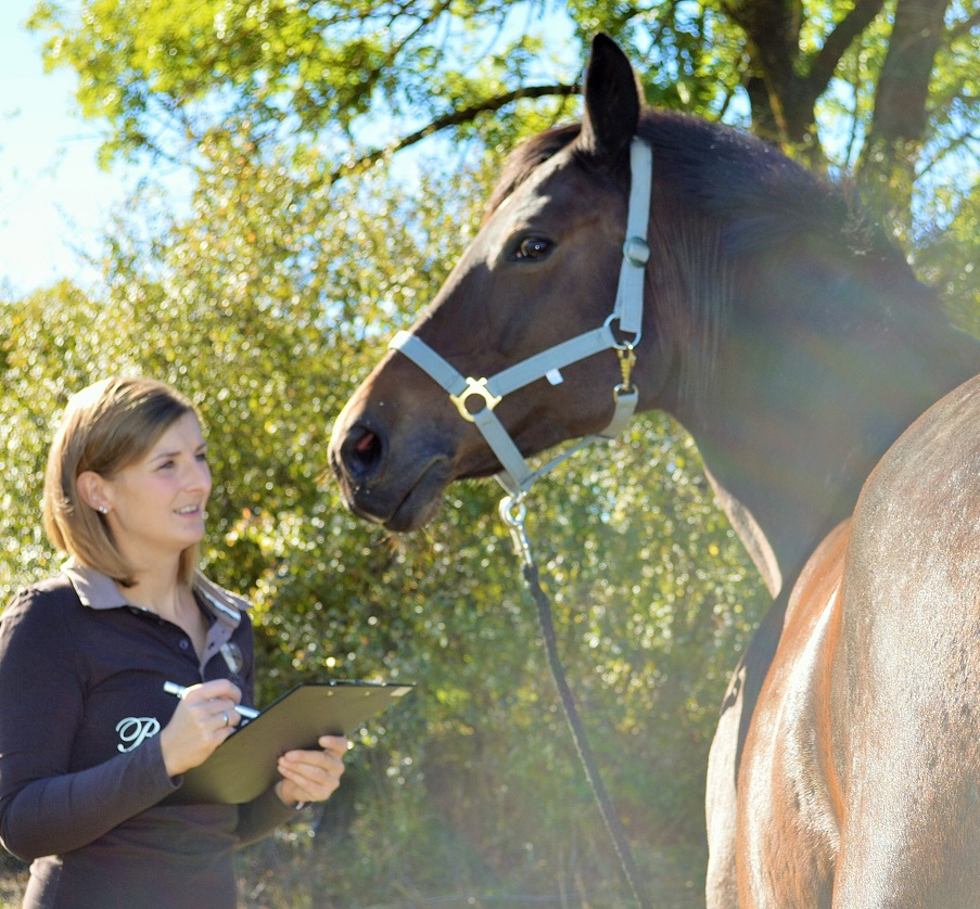 ReitFütterungsBeratung CHECK mittels Metavital EAVET für kranke Pferde, Pferde mit unklaren Symptomen. Endlich wissen was Deinem Pferd fehlt!