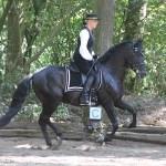 Sabines Prüfung Trainer A klassissch barock