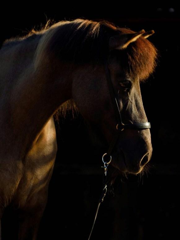Pferde - Askja