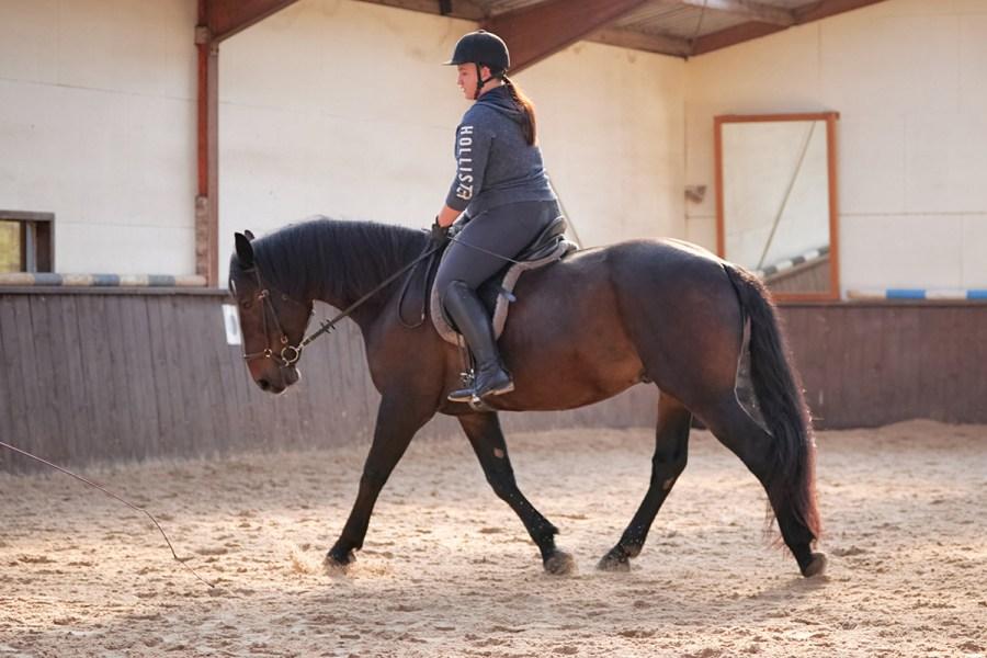 Pferd Calli bei der Arbeit in der Reithalle