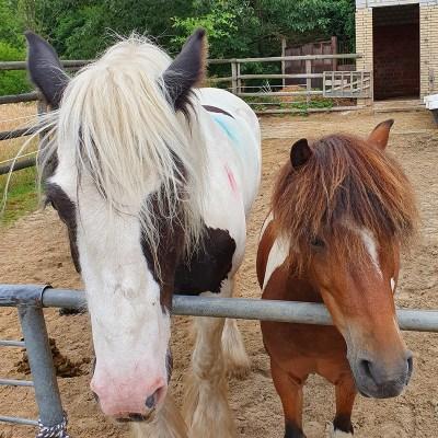 Tinkerstute Angel und Ponystute Baroness Foto: Sabine Pirker