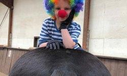 Beitragsbild Mädchen mit Regenbogenperrücke auf Pferd