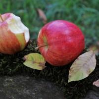 りんご酢ダイエットの効果はいつから現れる?寝る前や食前食後 飲むタイミングは?