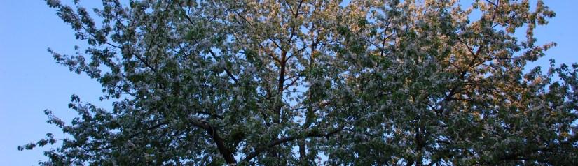 Frühling in Striesen