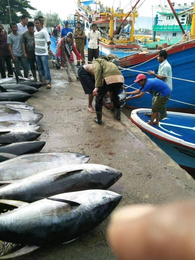 harga ikan tuna di indonesia