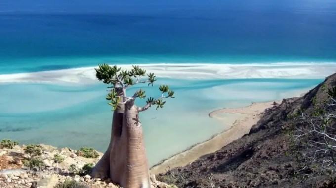 keunikan-pulau-socotra