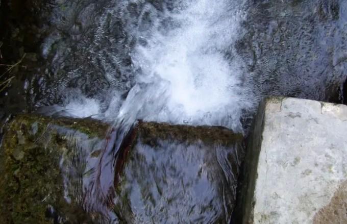air-untuk-belut