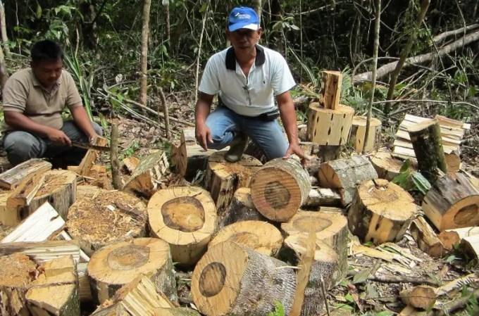 manfaat kayu gaharu