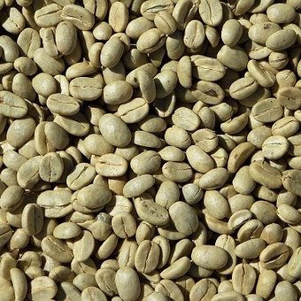 green bean coffee robusta