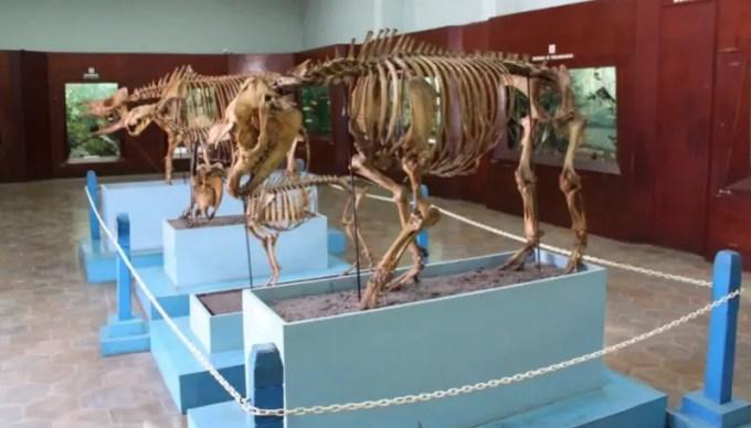 museum zoology bogor
