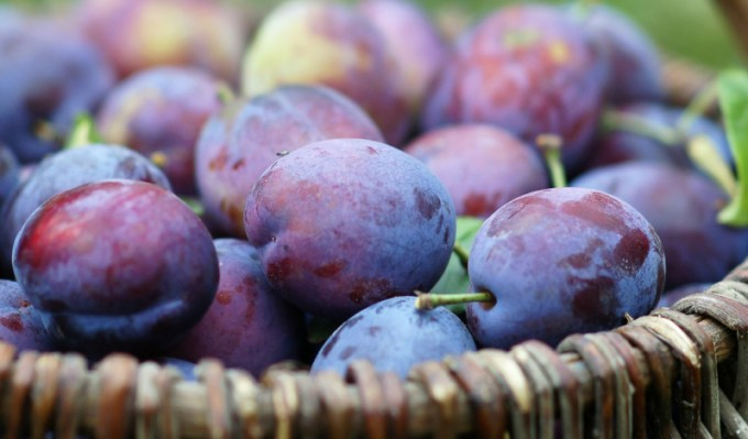 buah plum ungu