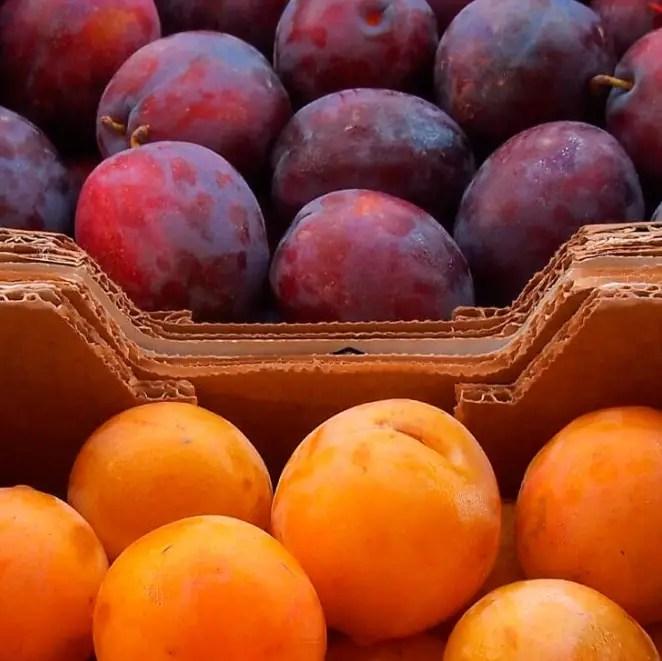 harga buah plum