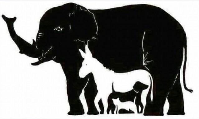 Hoeveel dieren?