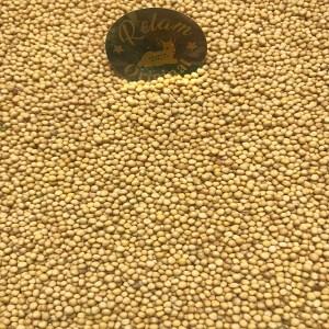 بذر خردل اصفر