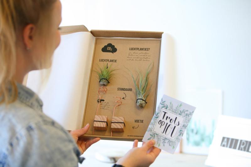 luchtplantjes lucht plantje relatiegeschenk idee eco geschenk