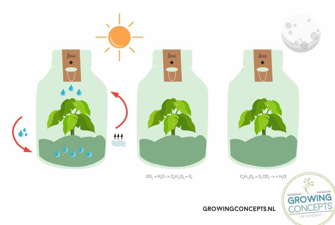 hoe werkt een ecosysteem weckpot plant