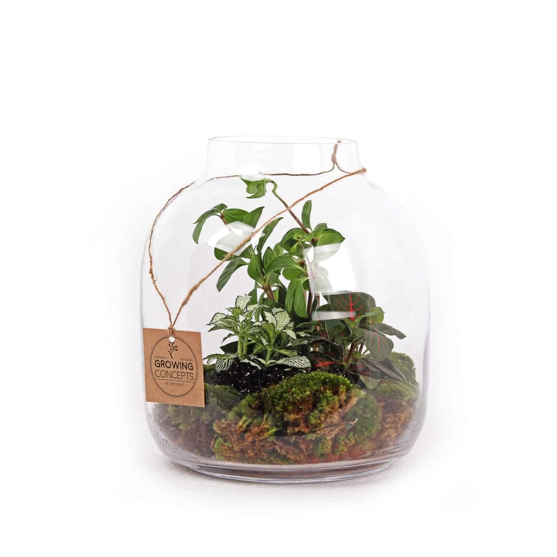 weckpot planten plant groen duurzaam relatiegeschenk idee trend
