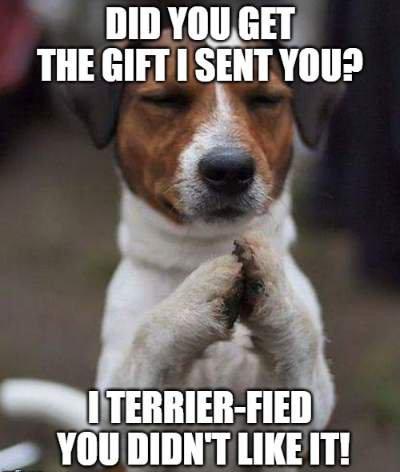 birthday wish for dog image9