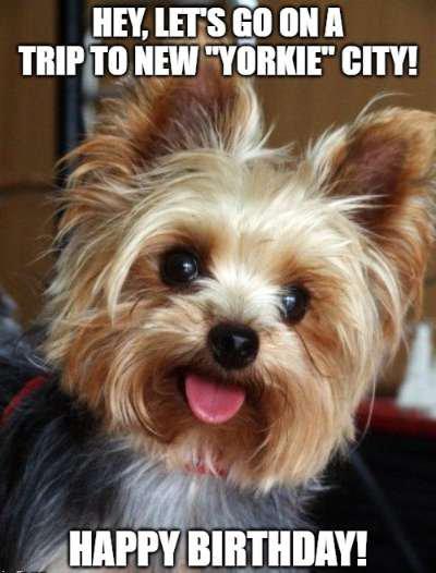 birthday wish for dog image for u