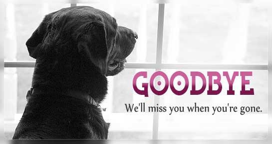 farewell img 12