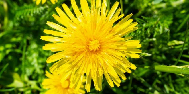 Weeds that Help You When Doing Magic