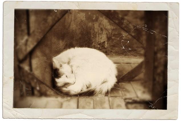 Sleeping Cat, Marrakesh 2010/10