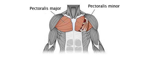 chest muscle exercise