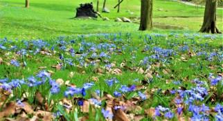 flores moradascopy