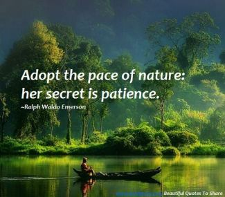 171 Relax and Succeed - Adopt the pace of nature