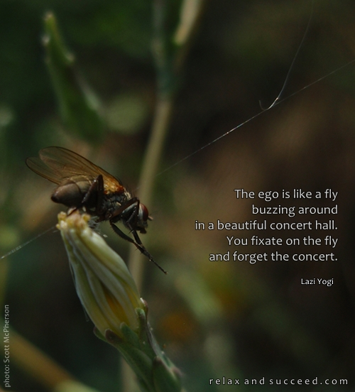 200 Relax and Succeed - The ego is like a fly buzzing around