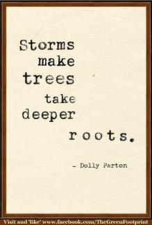 424 Relax and Succeed - Storms make trees take deeper roots