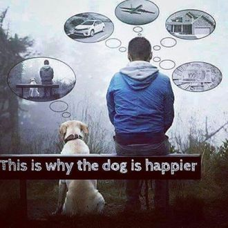 953 FD Relax and Succeed - This is why the dog is happier