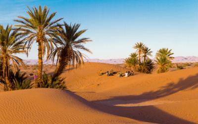 La Caravane de la Présence et de la Joie entre sud du Désert Marocain et Jardins d'Eden à Marrakech »