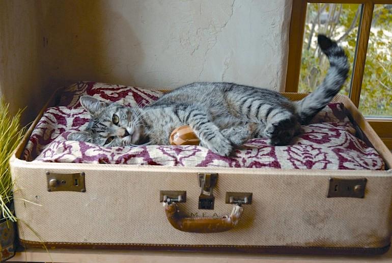 Hus til en killing fra en gammel kuffert