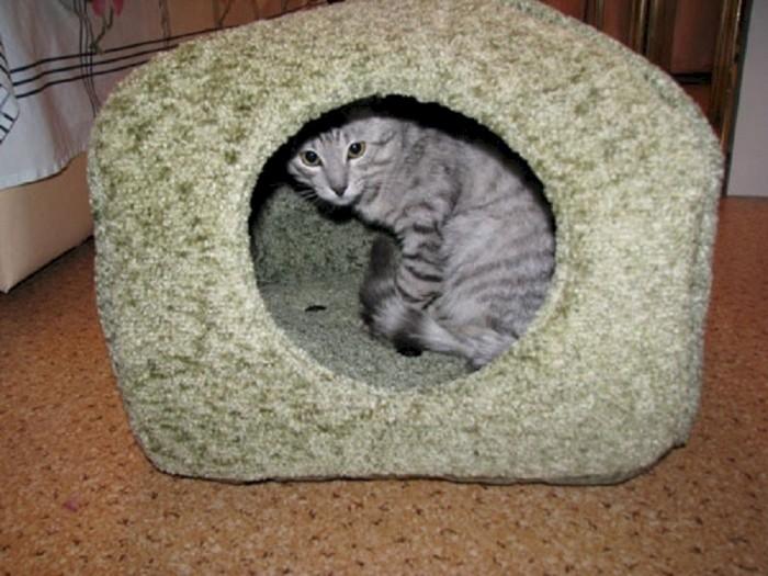 Blødt hus til en kat