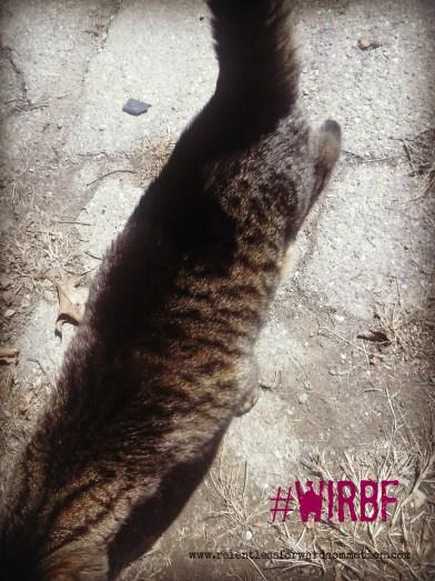 WIRBF2