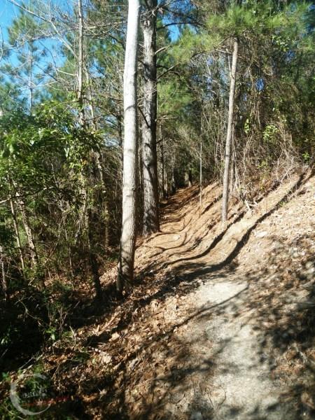 The Hulk Trail