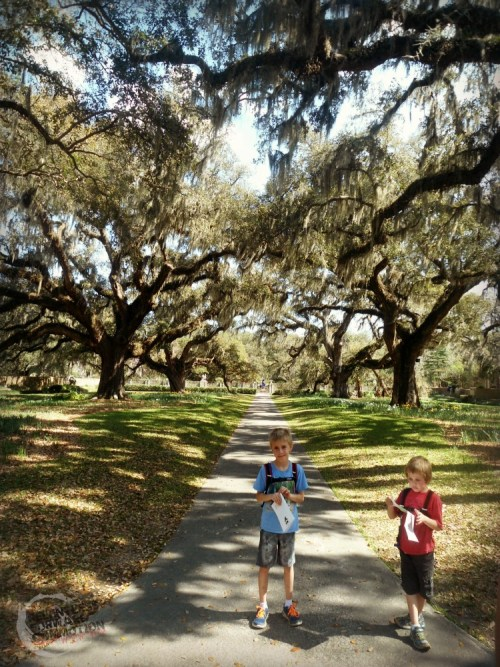 Live Oak Allee Brookgreen Gardens
