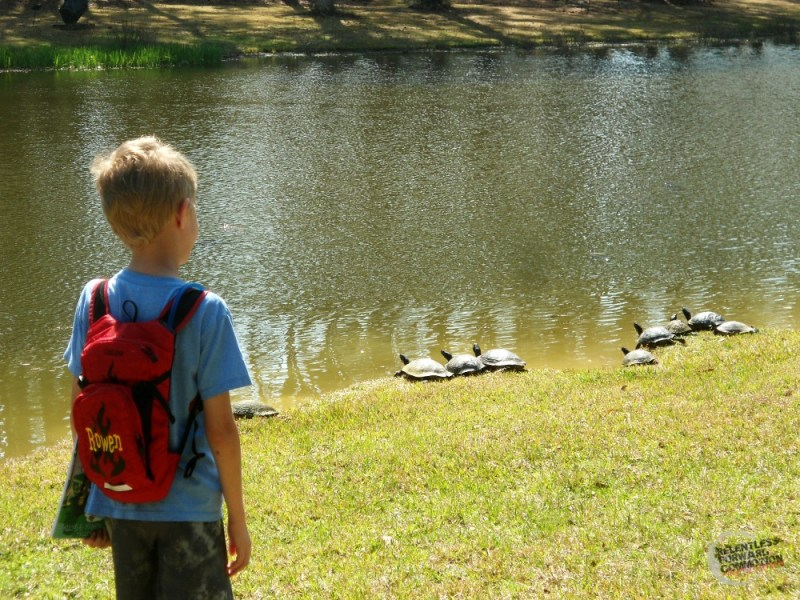 Turtles Brookgreen Gardens