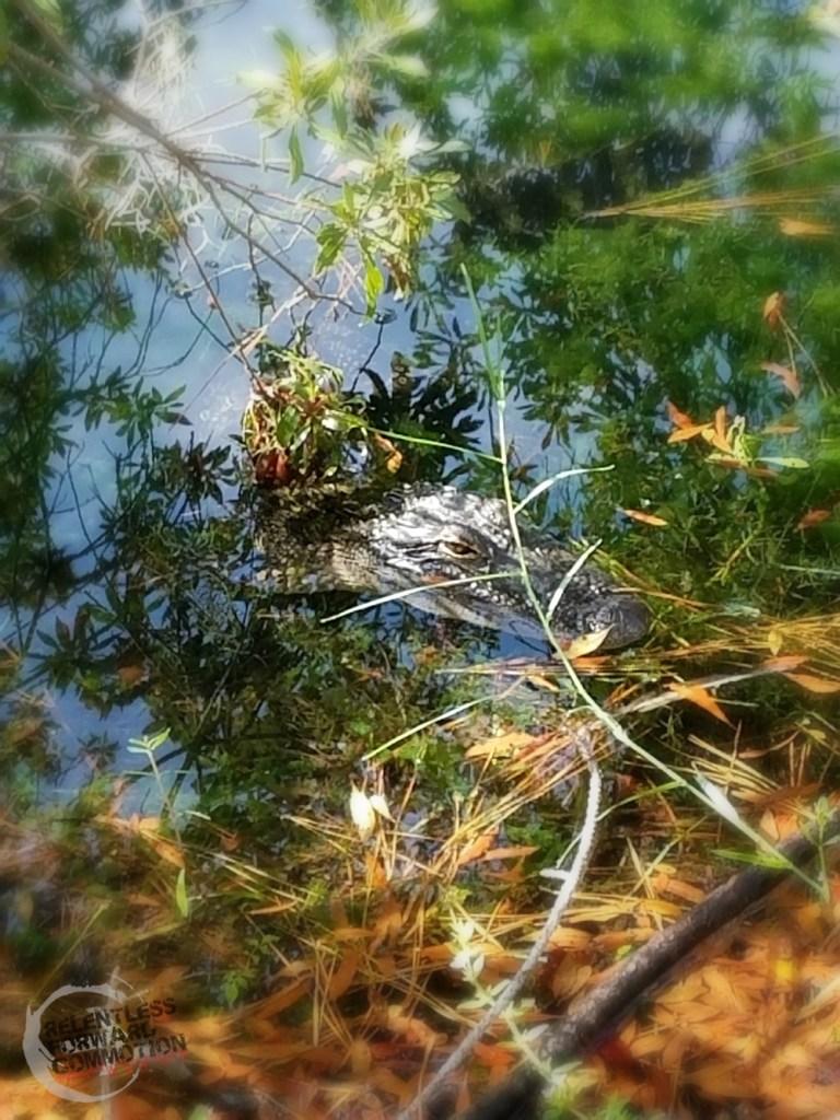 Alligator Dirt Dash