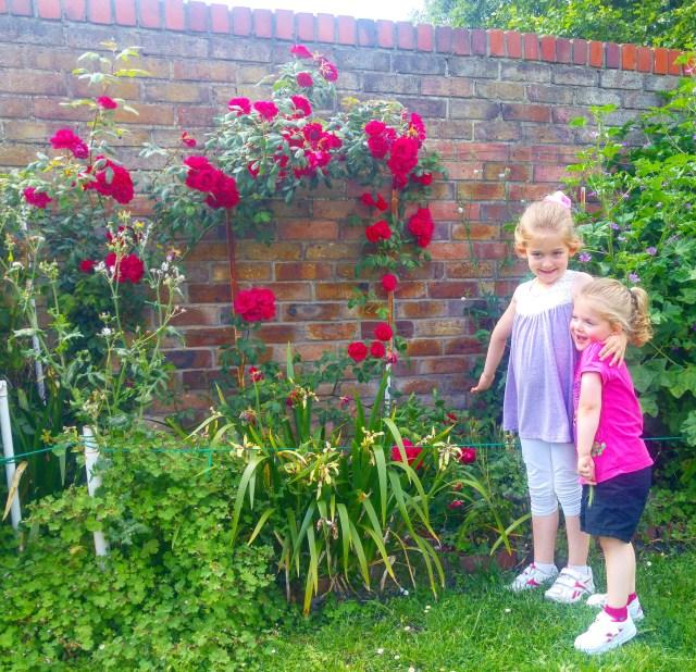 Beer garden - roses